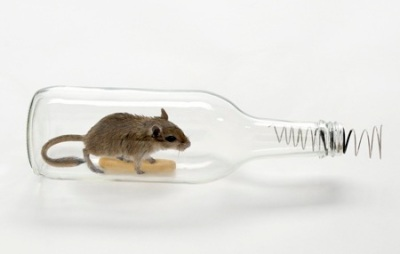 mouse-in-a-bottle_sq